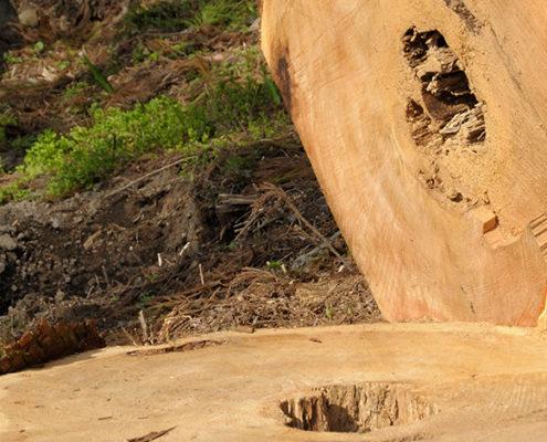伐採 庭木 植木屋