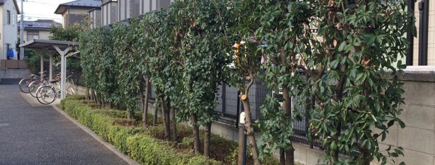アパートの植木剪定・植栽管理、草取り