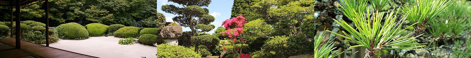 庭木のことなら金子造園におまかせください!