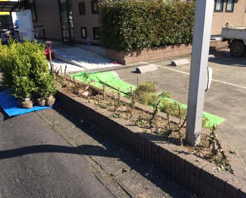 生垣 伐採 抜根 植樹 さいたま市岩槻区 造園業者 植木屋