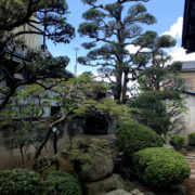 剪定 仕立て 庭師 和風庭園 ヒバ モチ 春日部市 植木屋