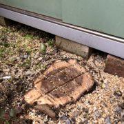 樫の木 伐採 庭木 撤去 さいたま 春日部市 造園業者 植木屋