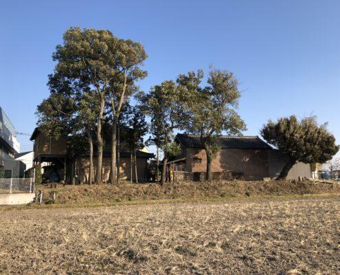 伐採 作業中 高木 さいたま市 春日部市 造園業者