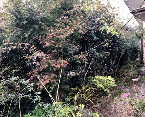 お庭 空き家 お手入れ 管理 剪定 伐採 除草 作業前 さいたま市 春日部市 植木屋