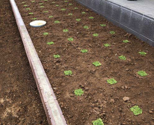 クラピア K5 植え付け 植栽 芝張り 芝生 春日部市 さいたま市 植木屋