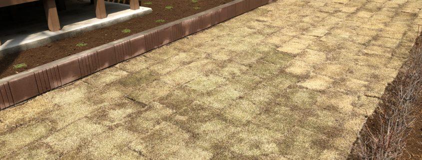 芝張り クラピア K5 芝生 お庭 春日部市 さいたま市 植木屋 庭師