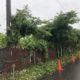 作業中 伐採 草刈り つる草除去 空き地 埼玉県春日部市 埼玉県幸手市 造園業者