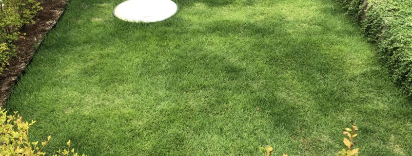 芝張り 生垣植樹 クラピア 庭造り アフターメンテナンス 春日部市 野田市 造園業者