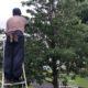 庭木 剪定 植栽年間管理 マンション アパート 埼玉県 さいたま市 春日部市