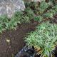タマリュウ 植栽 植え付け 植樹 和風庭園 造園工事 春日部市 さいたま市