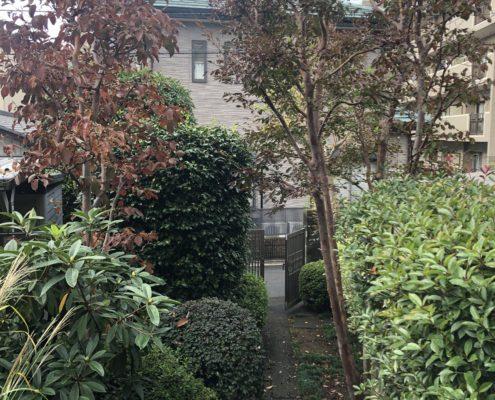 庭木 剪定 お手入れ 作業前 庭師 植木屋 さいたま市 浦和区