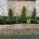 コニファー エメラルド 植樹 植栽 植え替え 花壇 お庭 春日部市 さいたま市
