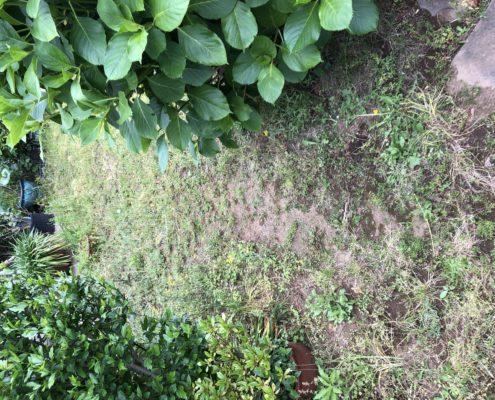 芝生 張り替え 芝張り スキ取り 残土処分 土の入れ替え 庭造り 造園 外構工事 ビフォーアフター 施工前