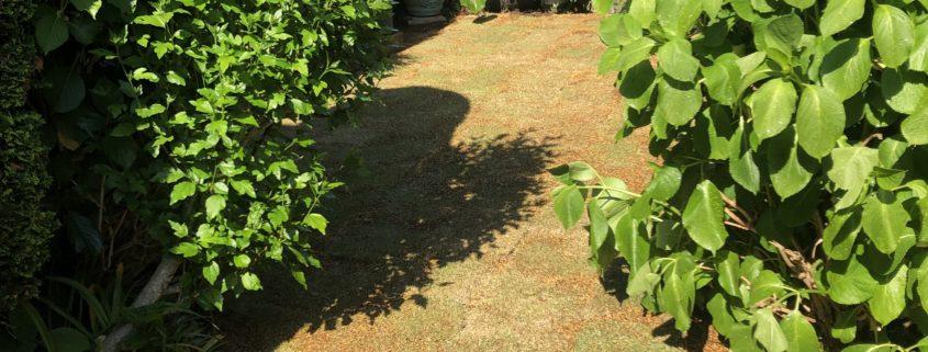 芝生 張り替え 芝張り スキ取り 残土処分 土の入れ替え 庭造り 造園 外構工事 ビフォーアフター 施工後